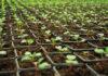 sklep z nasionami